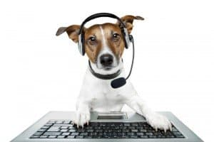 Dog video chat